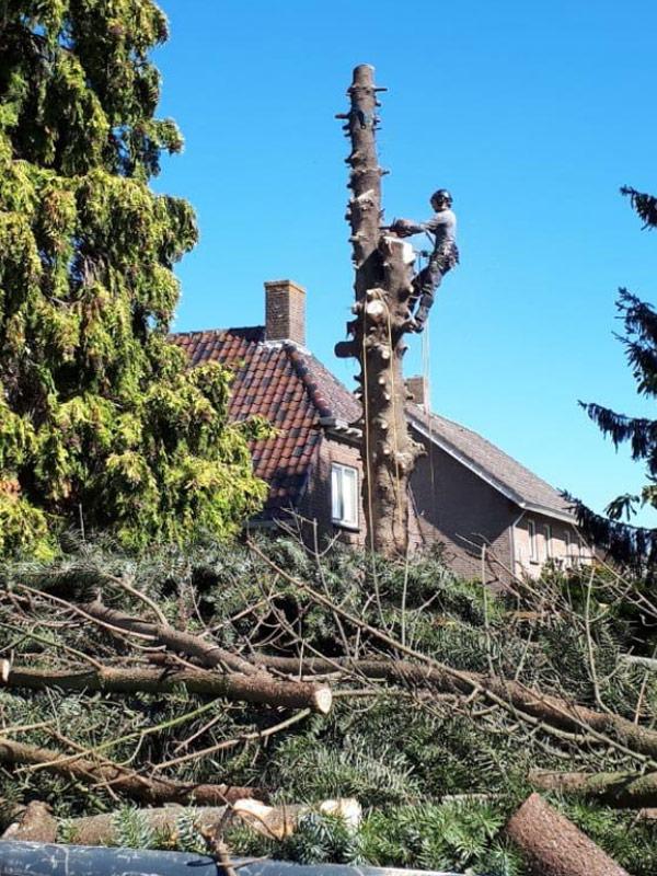 bomen laten kappen