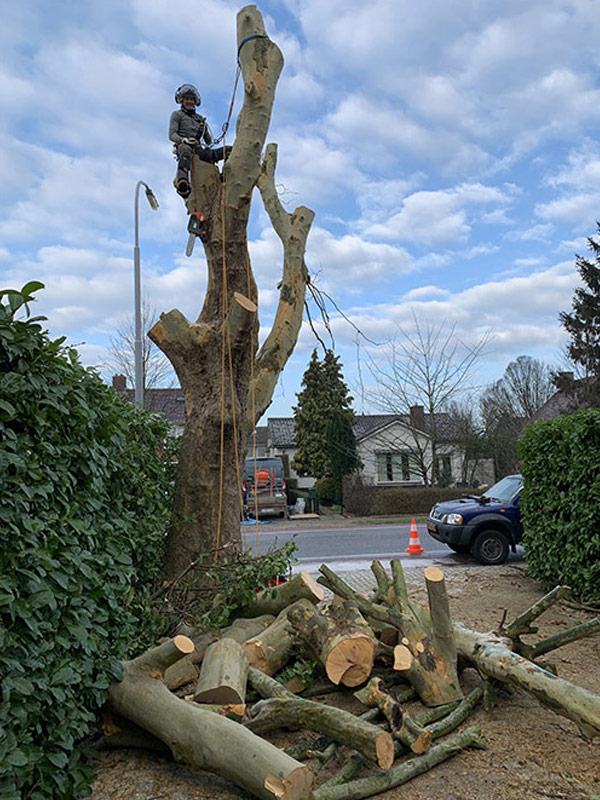 boom laten verwijderen