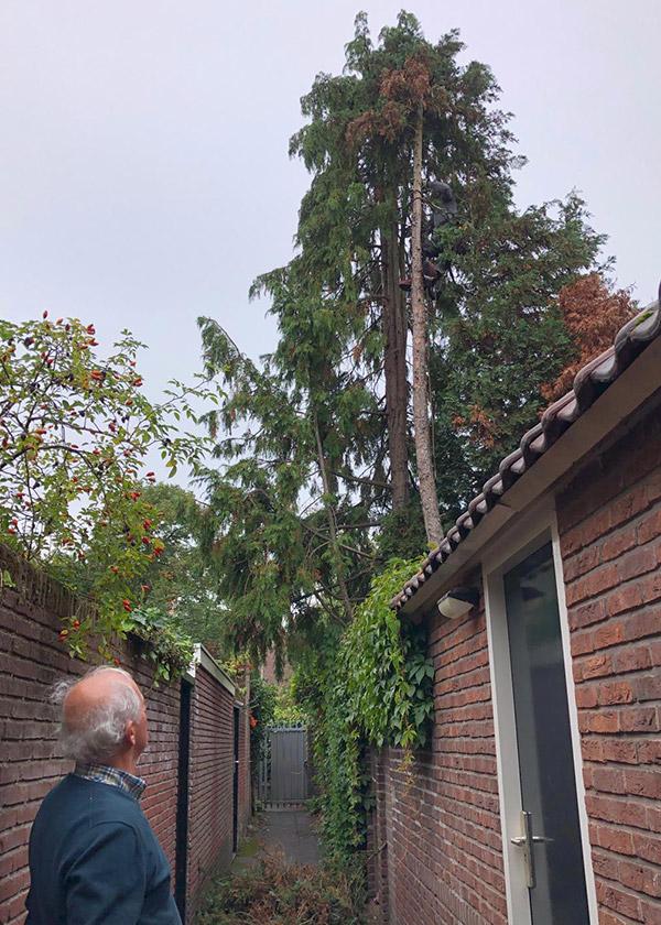 Onderhoud boom