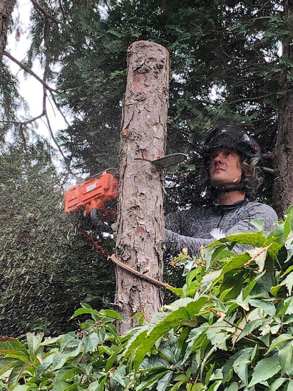Boom verwijderen rosmalen