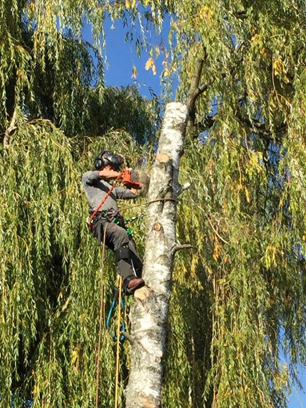 boom kappen in oisterwijk