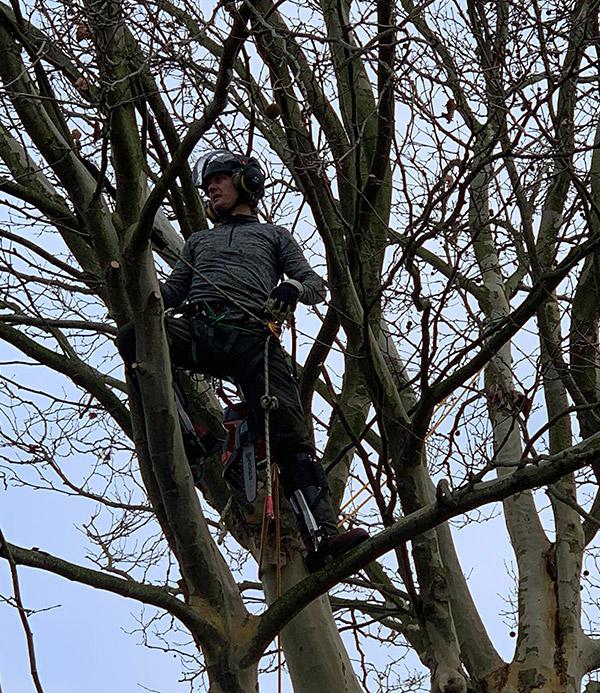 bomen snoeien in Sint-Michielsgestel