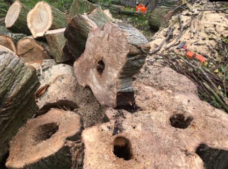 Onderhoud van bomen in Hedel
