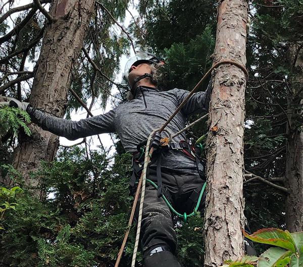 boomonderhoud schijndel