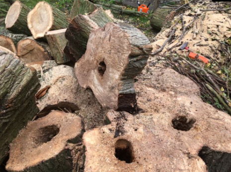 onderhoud van bomen in Tiel